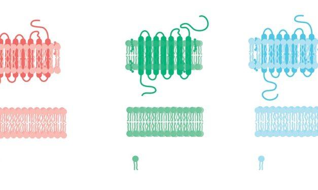 Hvad er cellemembranen?