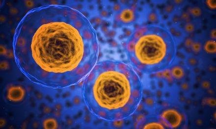 Cellerne i menneskekroppen