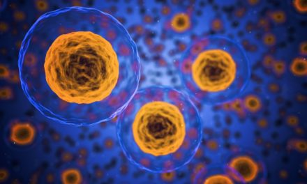 Cellerne er menneskekroppens byggesten