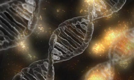 Cellens opbygning og funktion