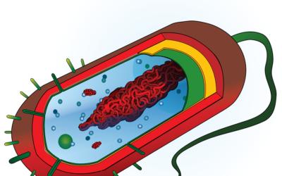 Hvad er phospholipider?