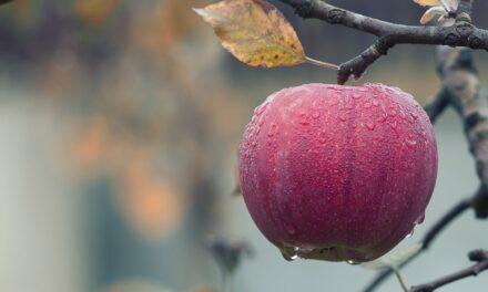 Bliv endnu sundere med egne frugter fra baghaven