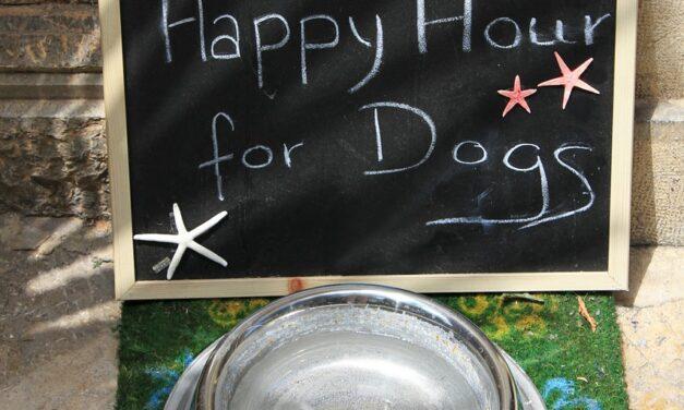 Køb Gilpa hundefoder til fornuftige priser