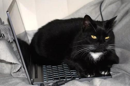Når katten blander sig i dit online arbejde