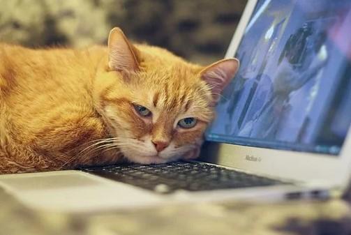 Kat på computer