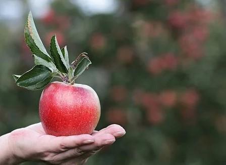 Et æble om dagen…