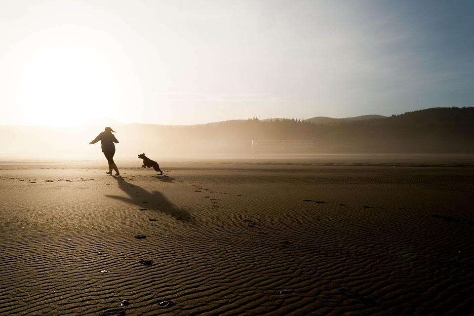Forkæl din firbenede træningspartner med en hunter hundeseng