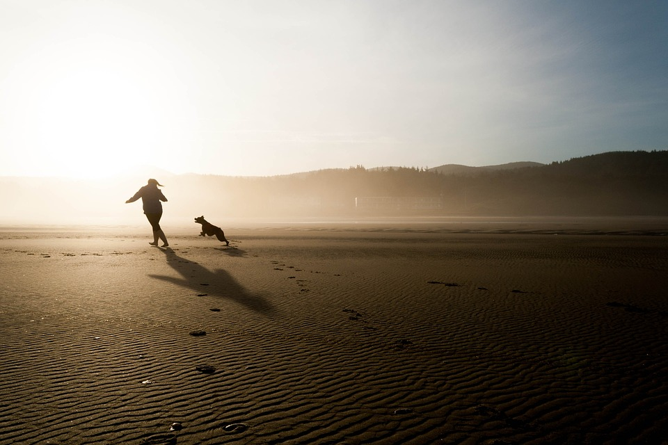 Tag hunden med på en løbetur