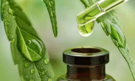 Bliv klogere på CBD Cannabis olie